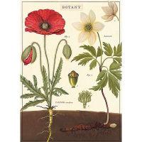 Plakat Botany