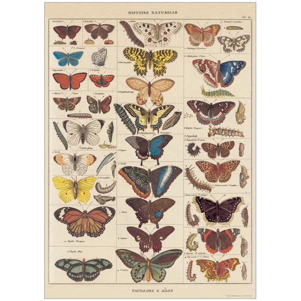 Plakat-Histoire-Naturelle-Papillons