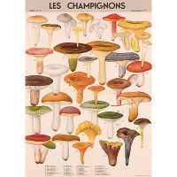 Plakat-les-champignons