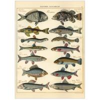 Plakat-les-poissons