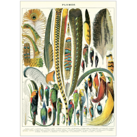 Plakat-plumes